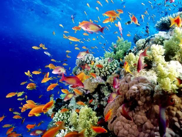 marea-bariera-de-corali